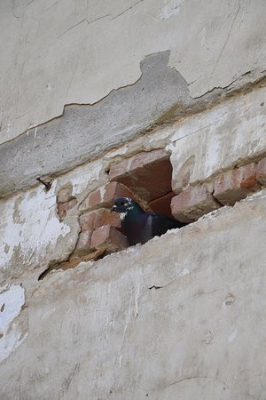 Malcoci, Rumania: Birds have made their home within the exposed areas.