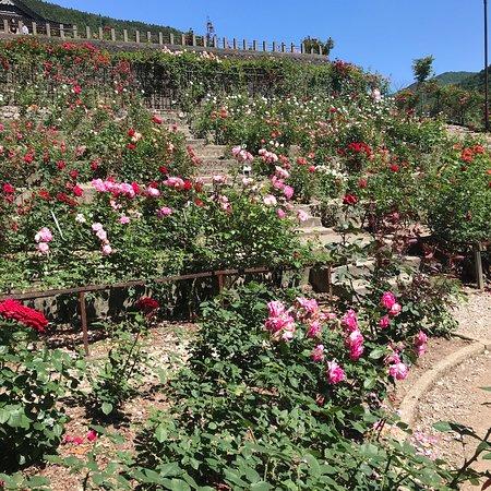 Atsumi Onsen Rose Garden Park
