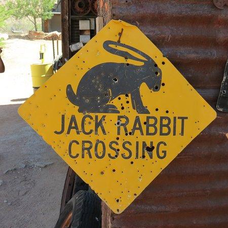 Hackberry, AZ: Jack Rabbit Crossing
