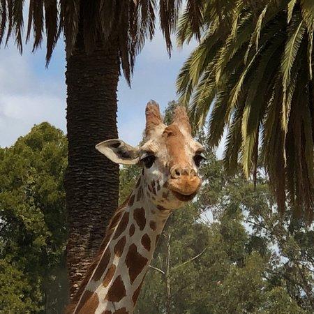 Oakland Zoo: photo1.jpg