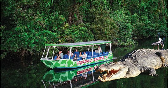 Daintree, Australia: Crocodile Express cruises will take you up close to see our unique wildlife and the rainforest