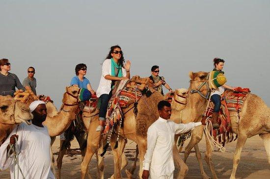 Camel Ride Desert Safari Tour fra Doha