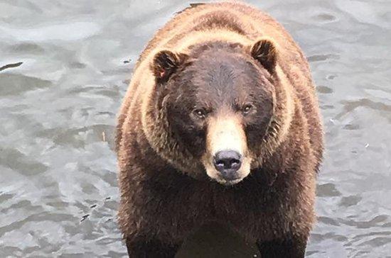 熊、醸造所、トーテム歴史ツアー