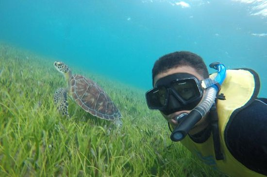 4-in-1 Cancun Snorkeling Tour: Swim...