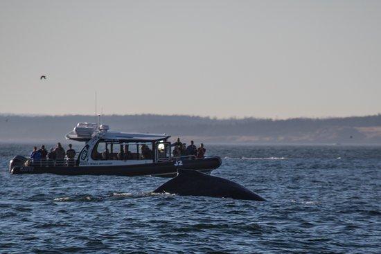Oak Harbor, WA: Humpback whale!