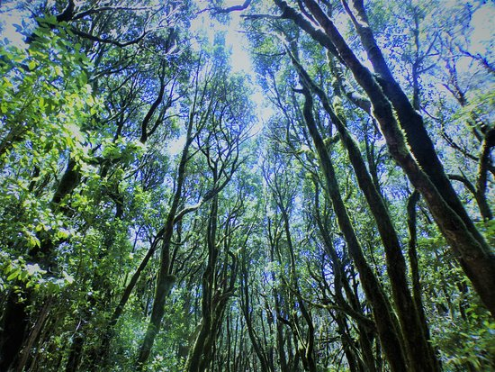 La Laguna Grande: beautiful forest