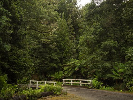 Weldborough, Australia: Amazing tree ferns