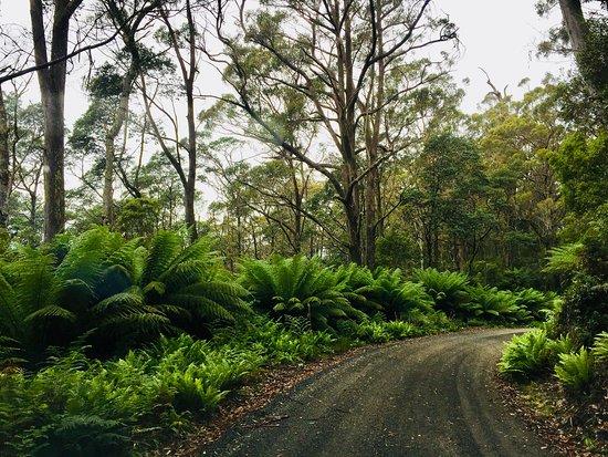 Weldborough, Australia: Lush sub-alpine bush.  Amazing how these ferns survive the cold.