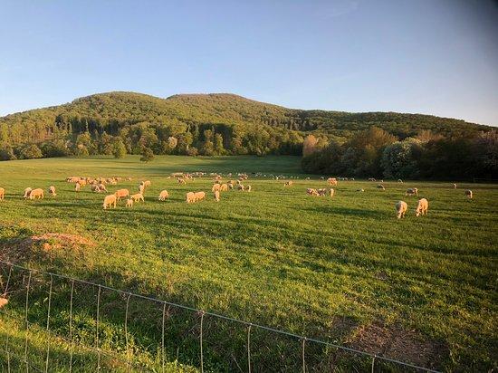 Farma pod Vtacnikom