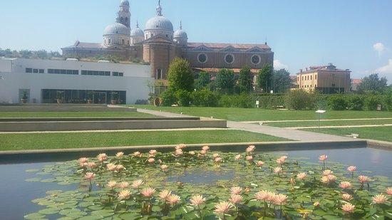 帕多瓦植物园照片