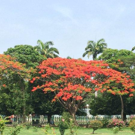 Royal Orchid Brindavan Garden Palace & Spa