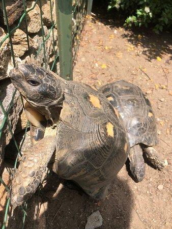 Villaggio Li Cucutti: Le tartarughe 🐢
