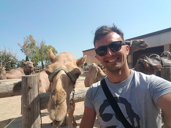 Mazotos, Cypr: A quick selfie with a camel