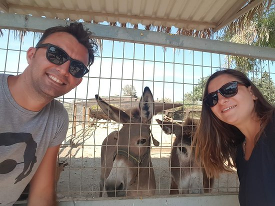 Mazotos, Cypr: Friendly and beautiful donkeys