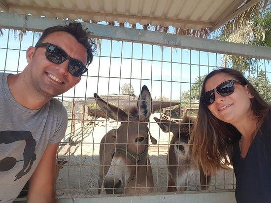 Μαζωτός, Κύπρος: Friendly and beautiful donkeys
