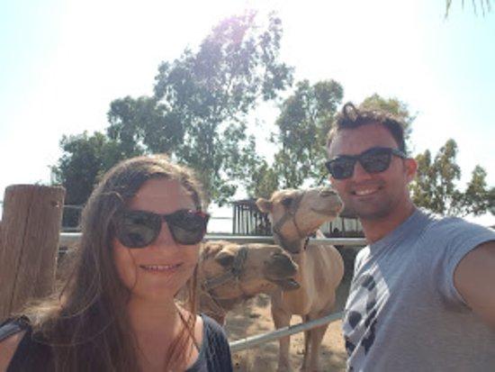 Μαζωτός, Κύπρος: The camels love to smile to the camera