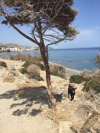 Myrtos Beach照片