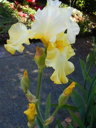 Schreiner's Iris Gardens 이미지