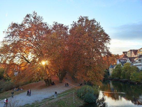 Historische Altstadt Tübingen: Platananallee