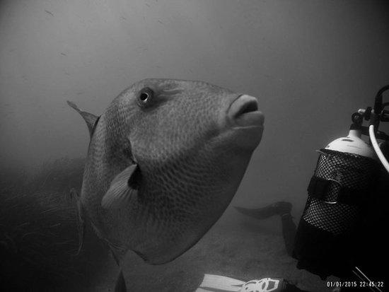 Enix, Spain: pez ballesta