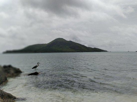 Cerf Island, Îles Seychelles : IMG_20180613_112217_Bokeh_large.jpg