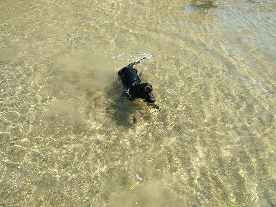 A nadar 🐶🏖