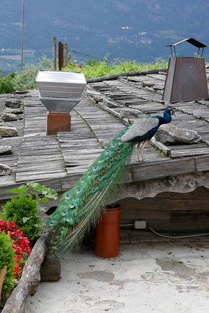 Cermes, Italia: Paradies für Fotografen
