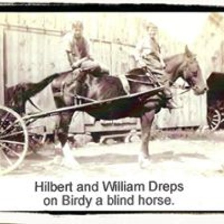 The Blind Horse Winery: An old picture of Birdy, the blind horse.