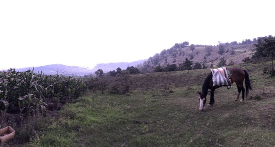 Acatenango Volcano: anyone change their mind about hiking and want to take the horse up instead?