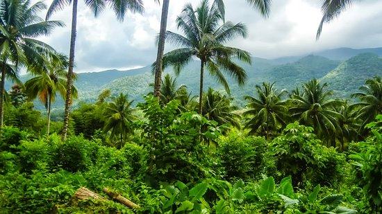 Kingston, Jamaika: Tropical humid