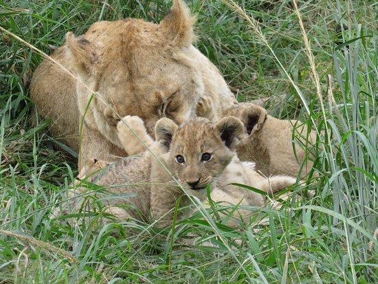 Leopard Hills Private Game Reserve Photo