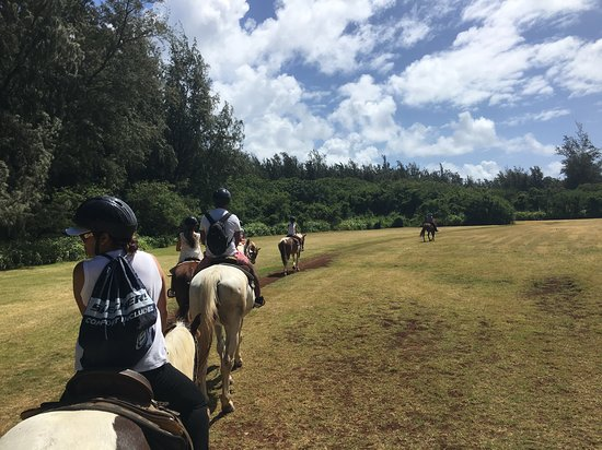Turtle Bay Resort Horse Riding: Nice little clearing