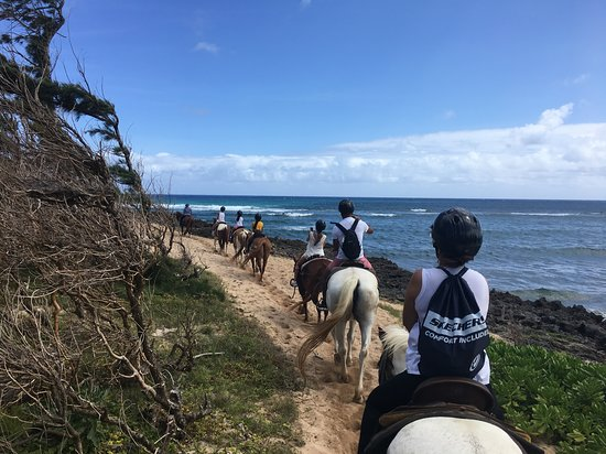 Turtle Bay Resort Horse Riding: What a view!!