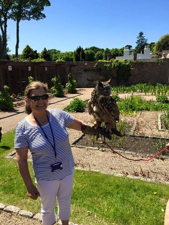 St. John, UK: Jersey Falconry