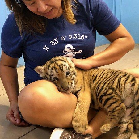 Wynnewood, Οκλαχόμα: baby tiger cub