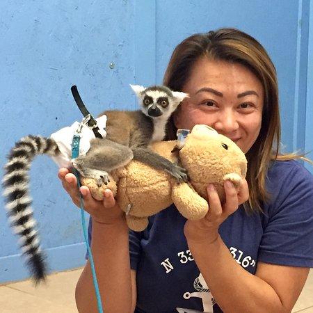 Wynnewood, OK: baby lemur