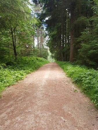 Dalby Forest Photo