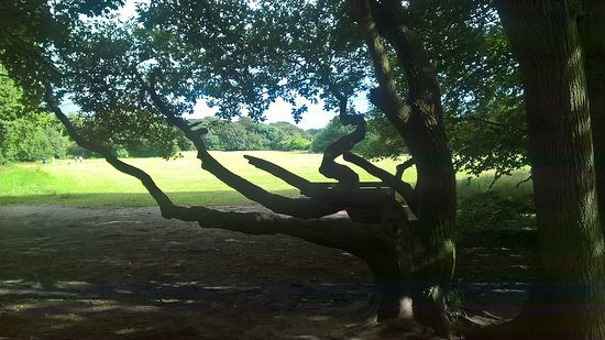 Eastham Country Park: Open space in middle of park