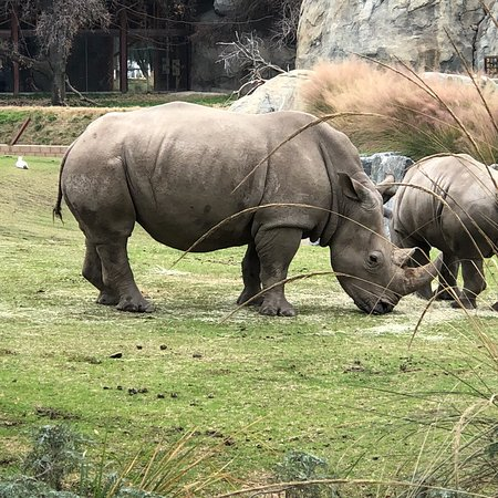 Fresno Chaffee Zoo: Some amazing Zoo grounds I've seen in a long time!