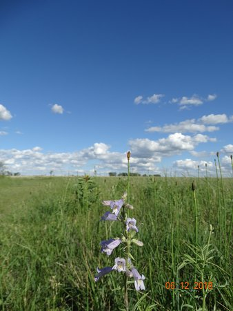 Moorhead, MN : Wild Flowers on Blue Stem Prairie Scientific and Natural Area