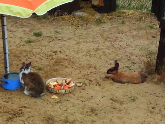 Osieczna, Poland: Milusińscy w mini zoo