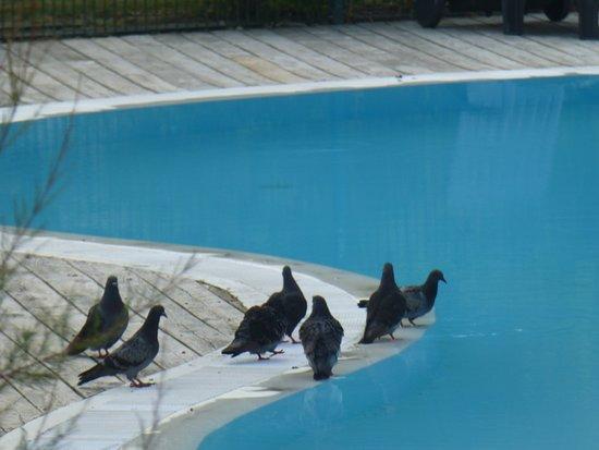 Bilde fra Madame Vacances - Residence Les Rives Marines