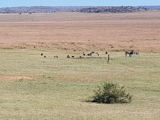 Welgevonden Game Reserve, Südafrika: 20180508_093950_large.jpg