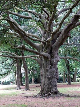De Bilt, Holandia: the big trees
