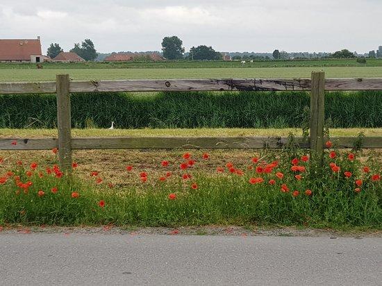 Retranchement, The Netherlands: 20180618_141548_large.jpg
