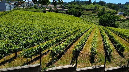 Felgueiras, Portugal: FB_IMG_1529435271354_large.jpg