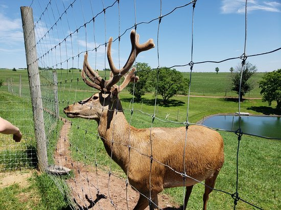 Red Deer at Rolling Hills Farm: 20180619_141806_large.jpg