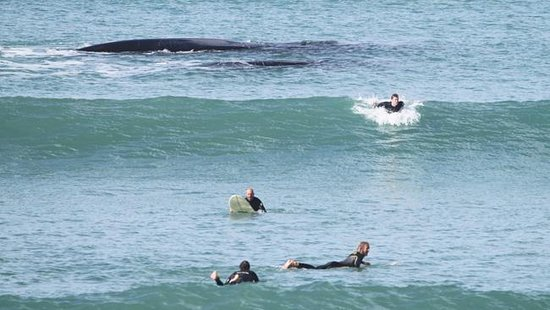 Middleton, Australia: Whales are frequently sighted at many of the Fleurieu Peninsula beaches.
