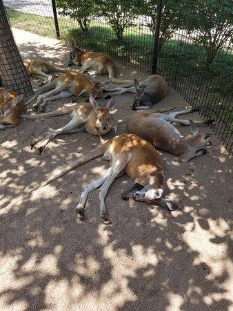 Tanganyika Wildlife Park: Good visit