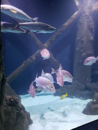 Downtown Aquarium (Houston) - 2018 All You Need to Know ...